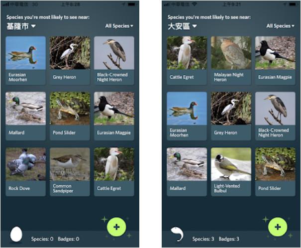 iNaturalist AI辨識數萬種鳥類昆蟲動植物照片,還有遊戲化App